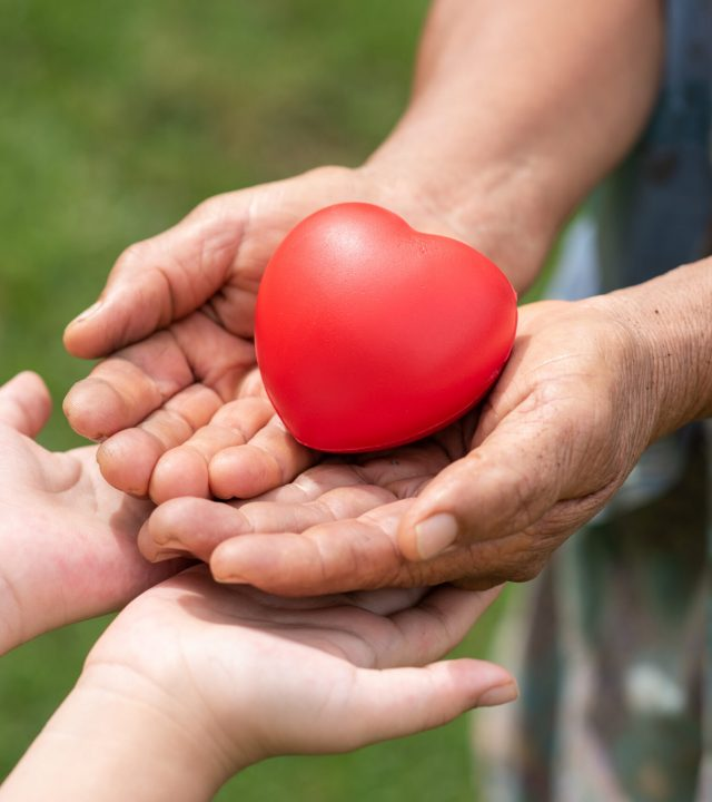 The red rubber heart on hands of elderly and child. Showed the cooperate, love, care, charity of people with differences diversity for sustain develop of farmer, community, society and the environment
